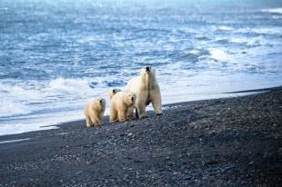 С 16 по 20 сентября в Анадыре пройдёт III Международная научно-практическая конференция «Вселенная белого медведя»